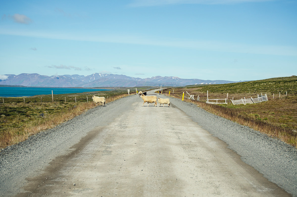 iceland road trip ring road (18)