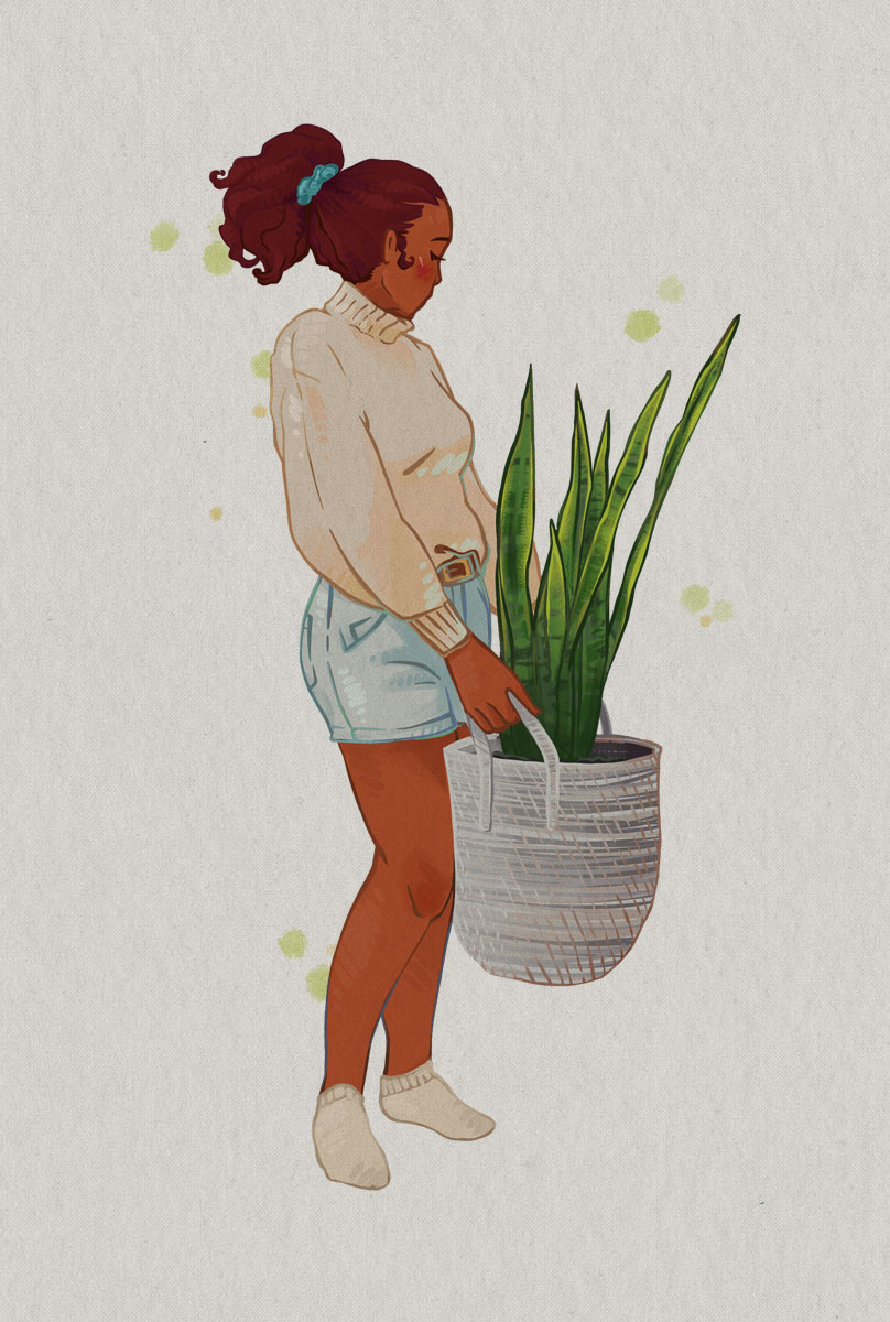 Illustration by Brittany Norris of snake plant houseplant